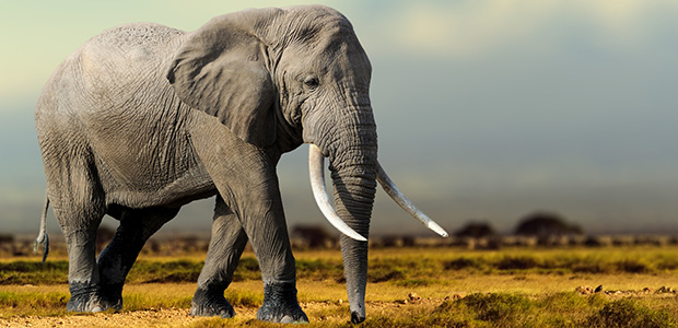 Corporates are the elephant in the impact room: here's what to do about them