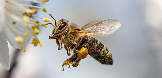 Why the UK government should back bees over neonicotinoids